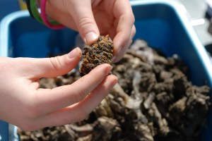 Vermicomposting guide pdf online