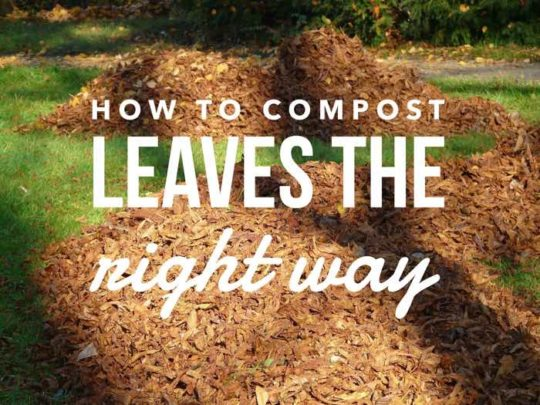 Using Leaves for Composting